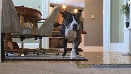 NS Slug: WI: 3-LEGGED DOG SHOT SAVING HOME  Synopsis: A couple is crediting their dog with saving them from a home intruder.  Keywords: WISCONSIN ARMED ROBBER HERO ANIMALS DOG