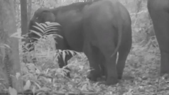 Protecting Asian elephants Allen pkg_00004611.jpg
