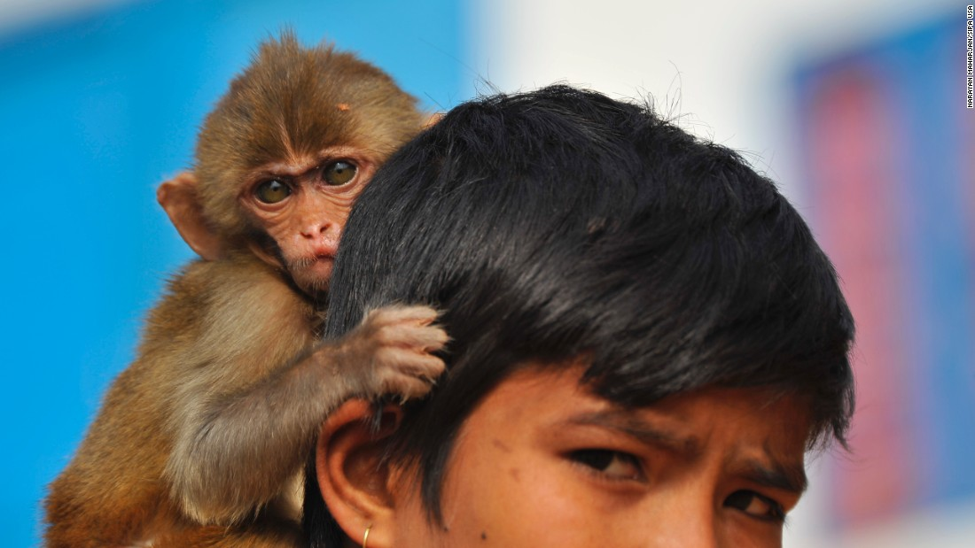 A young boy and his pet monkey in Nepal await the Year of the Monkey on Friday, January 15.