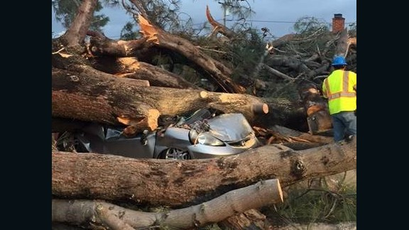 An 80-foot-tall tree fell on a car in San Diego, killing the driver.