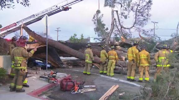 driver killed when tree falls on car kfmb dnt_00010725.jpg