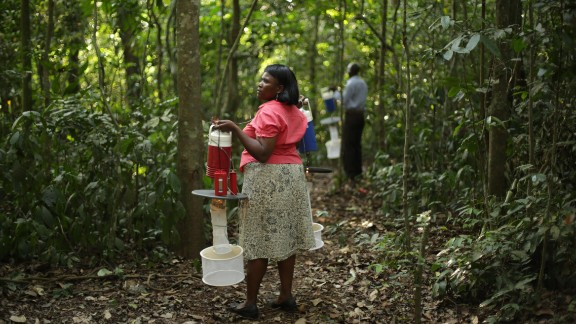 Researchers hang mosquito traps before sunset. Uganda sits in the middle of seven distinct bio-geographic zones, its biodiversity is credited for attracting the first scientists to Zika forest in the 1930s.