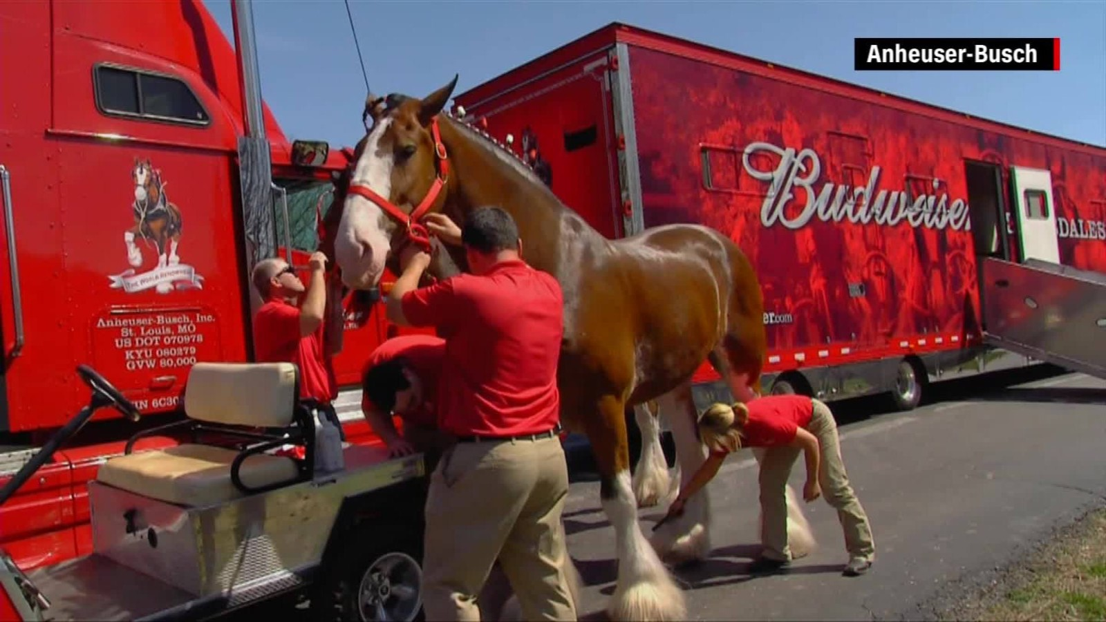 Where Budweiser Clydesdales Are Born Raised Cnn Video