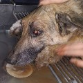 04 dog bired alive missouri