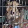 06 dog bired alive missouri