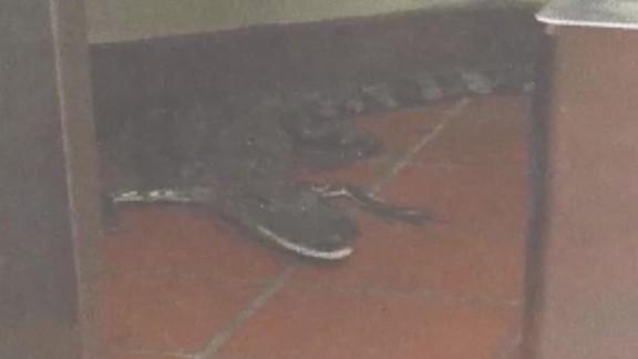 man throws alligator in wendy's wptv dnt_00004611.jpg