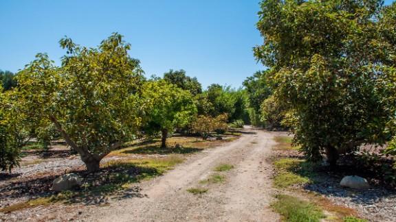... And an avocado grove.