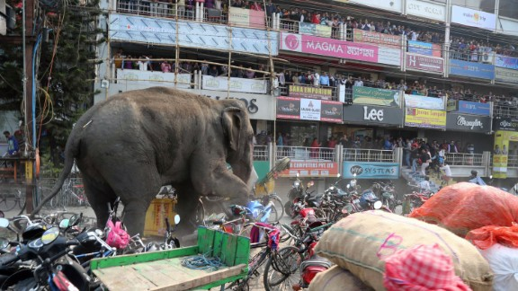 FILE PHOTO: A wild elephant with a tranquilizer dart in its back in Siliguri, India, on February 10, 2016.