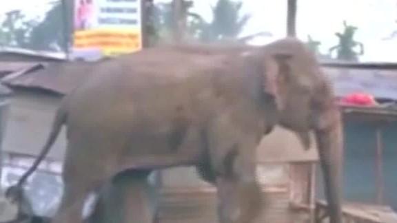 india elephant runs amok seg_00001608.jpg