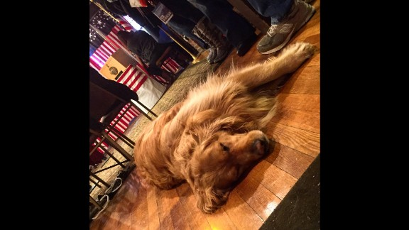"NEW HAMPSHIRE: ""Sophie the dog has given up on staying up late for the first vote in the New Hampshire Primary. In the background you can see the ballot box for the town of Dixville Notch. Voting starts at midnight and wraps up pretty quick -- after all -- 9 people get to vote in this town."" - CNN's Khalil Abdallah @madcameraman, February 8."