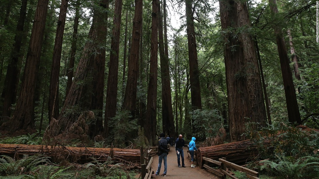 "Golden Gate National Recreation Area, which encompasses 80,000 acres across three counties, had 14.8 million visitors last year. One of its <a href=""http://www.nps.gov/goga/planyourvisit/index.htm"" target=""_blank"">spectacular spots is Muir Woods</a>, shown here, where visitors can see coastal redwood trees."