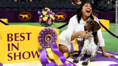 photos westminster kennel club dog show
