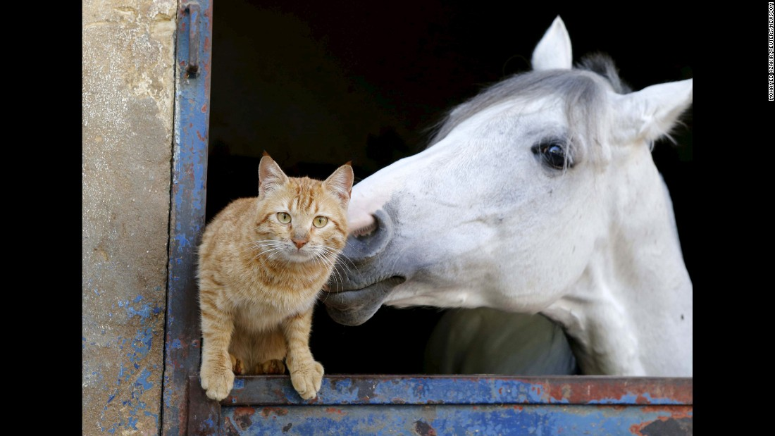A cat stands near a horse in Beirut, Lebanon, on Tuesday, February 16.