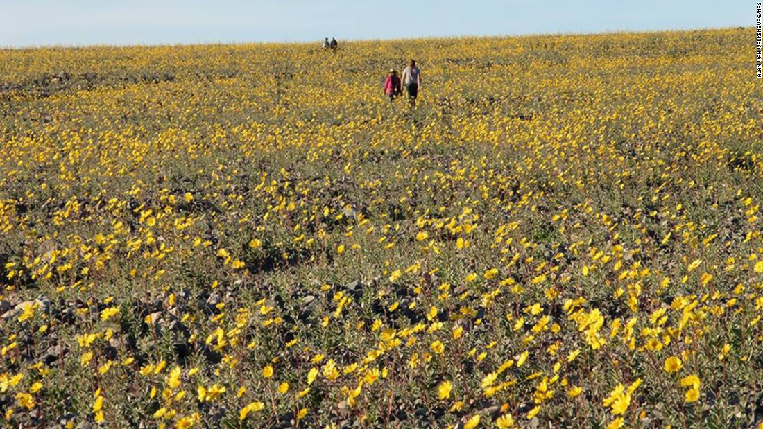 "This national park in California's desert hasn't had a ""super bloom"" of flowers since 2005. Now it is the site of an unusual phenomenon, where its valley floor is covered in a blanket of colorful wildflowers. The National Park Service says it was caused by an increase in rainfall followed by the heating of the area. There are more than 20 types of flowers within the valley, with colors ranging from pale white to violet."