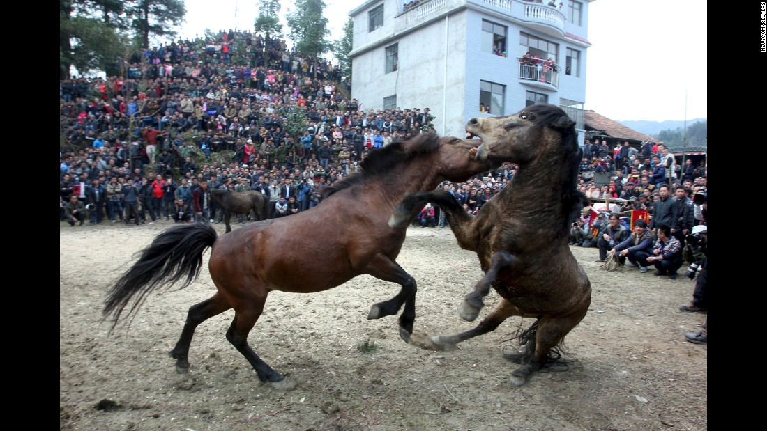 Two horses fight in Liuzhou, China, at an event celebrating the Lunar New Year on Saturday, February 20.