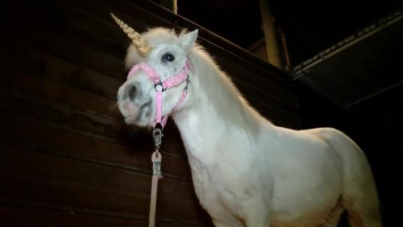 pony dressed as unicorn escapes pkg_00005013.jpg