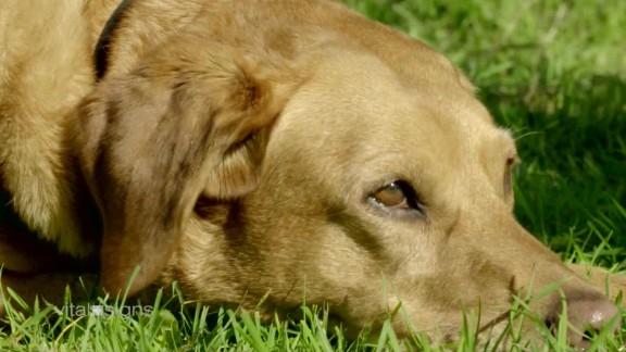 animal therapy vital signs spc b_00055420.jpg