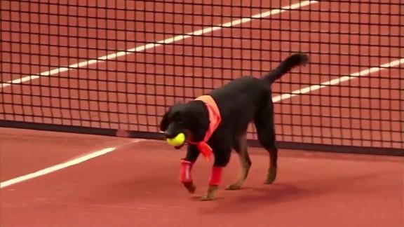 Dogs Brazil Open tournament tennis _00001125.jpg