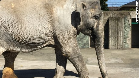 The Asian elephant was brought to Tokyo from Thailand when she was just two years old.