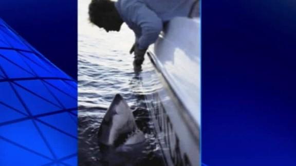 large great white shark caught fisherman pkg_00004514.jpg