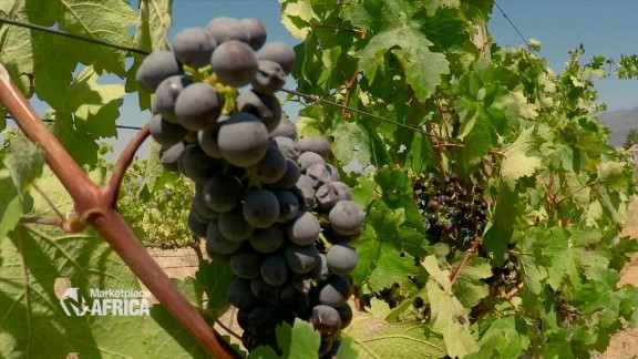 marketplace africa south africa wine industry spc a_00012606.jpg