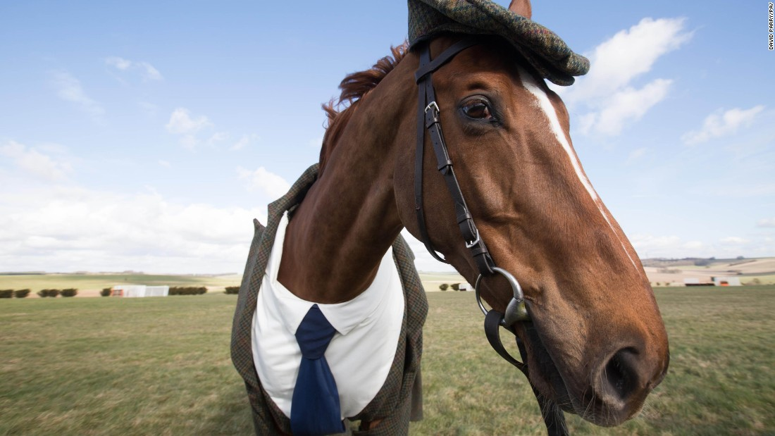 Racing fans will wear enough tweed this week to stretch one and a half times around every horse race track in Britain and Ireland, according to statistician Dr. Geoff Ellis.