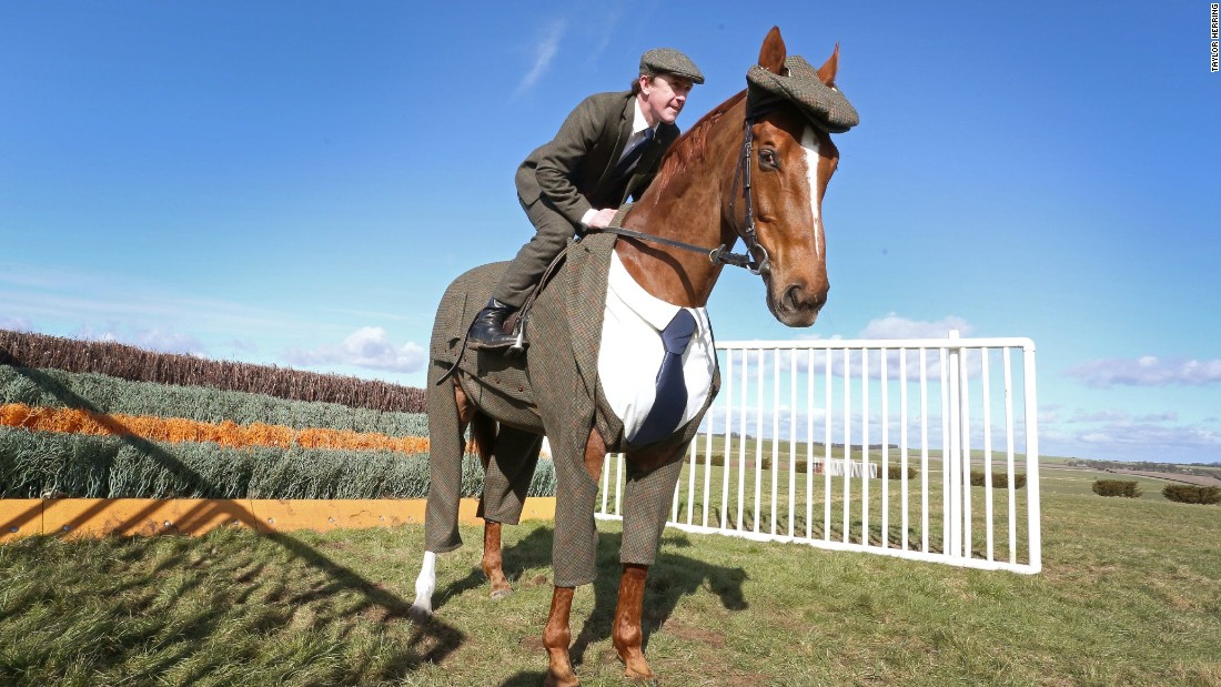 "Ahead of this week's Cheltenham festival, a ""tweed steed"" was unveiled by 20-time champion jockey Tony McCoy."