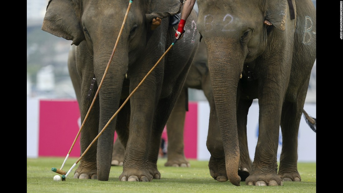 Players take part in an exhibition match during the annual charity King's Cup Elephant Polo Tournament at a riverside resort in Bangkok, Thailand, on Thursday, March 10.