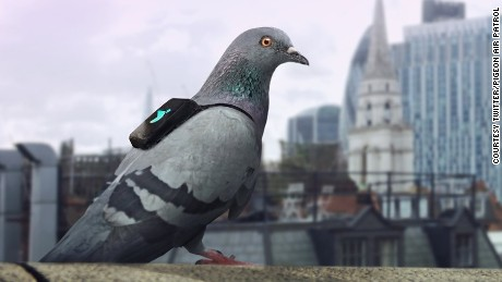 The Pigeon Air Patrol measures nitrogen dioxide in London, which has a high level of air pollution.