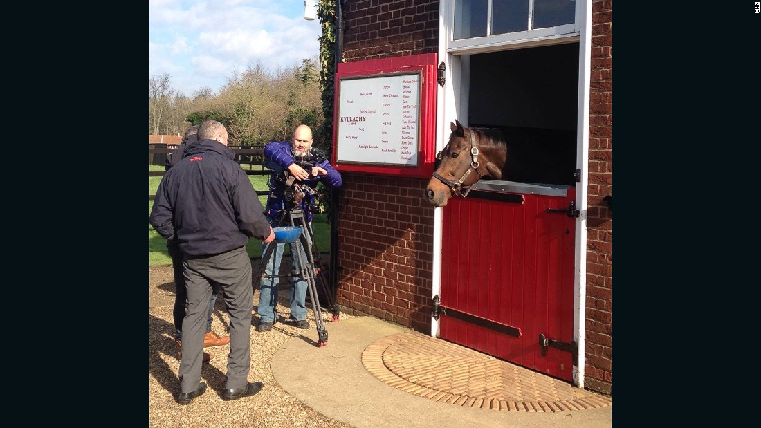 Pivotal's son, Kyllachy, himself a champion sire, demands some attention from our camera crew.