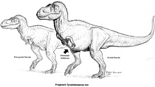 Pregnant T. rex unearthed