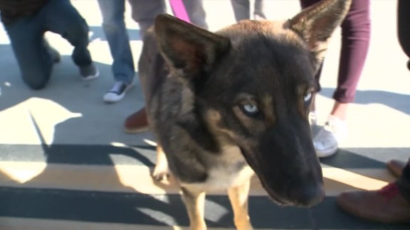 dog lost at sea found dnt_00001716.jpg