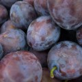 purple prunes 1