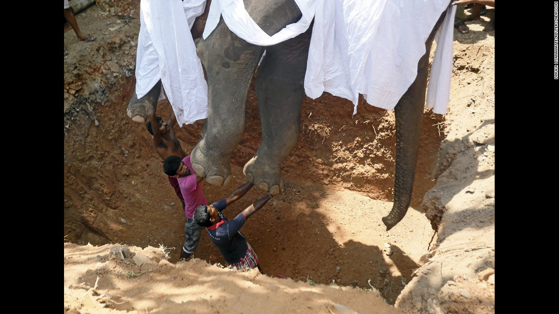 Villagers prepare to bury the body of the elephant Hemantha during a religious ceremony in Colombo, Sri Lanka, on Tuesday, March 15. The 23-year-old animal had been undergoing medical treatment to its feet before succumbing to the injuries.
