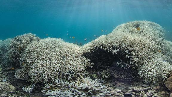 Dramatic coral bleaching, seen in Australia
