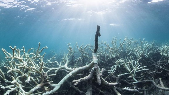 "Some of the bleaching of reefs in the northern section has been described as ""extreme."""