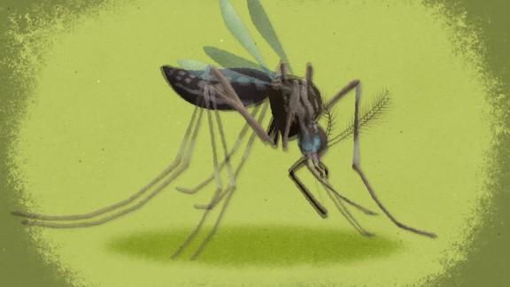 zika animation dr. sanjay gupta ts orig_00002205.jpg