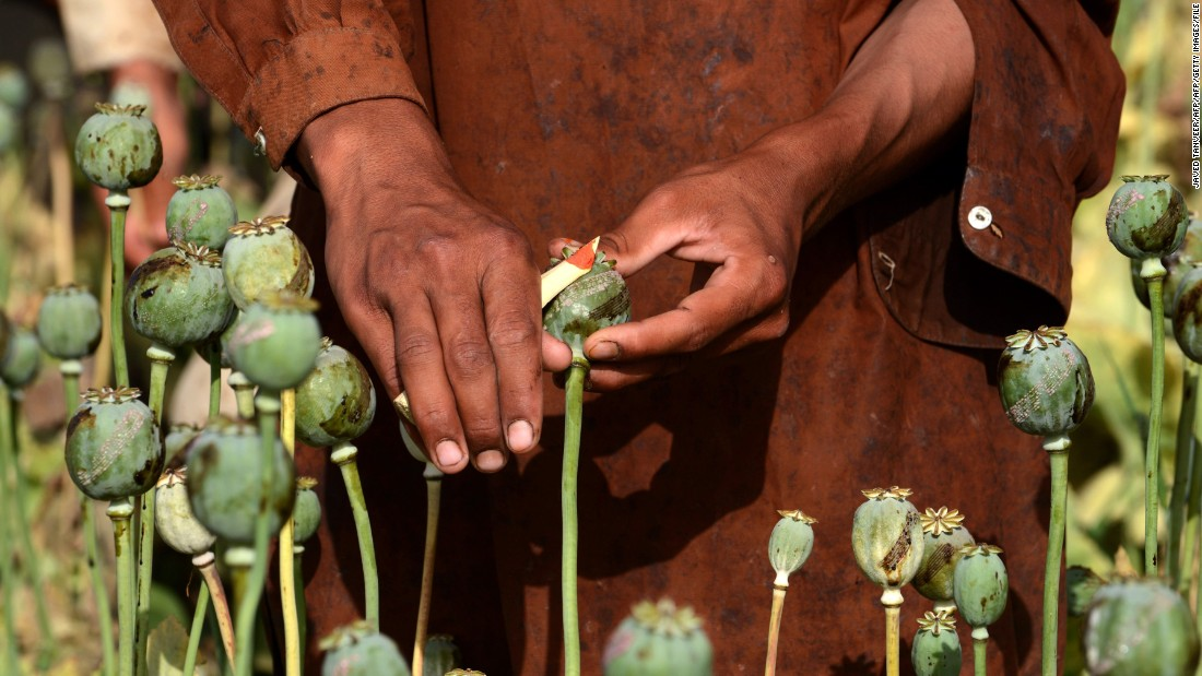 Poppy farms face many challenges both from the perspective of trying to grow crops reliably each year and the movement of narcotic materials across borders.