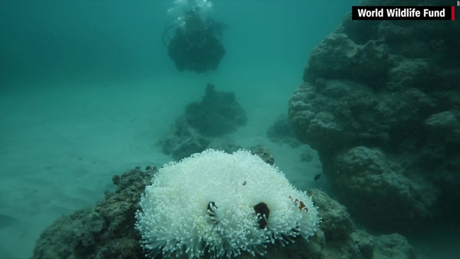 coral bleaching affects over 90 of great barrier reef cnn