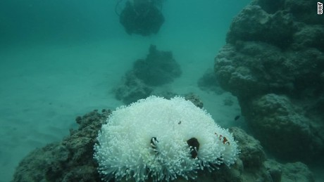 Dramatic images of Great Barrier Reef dying