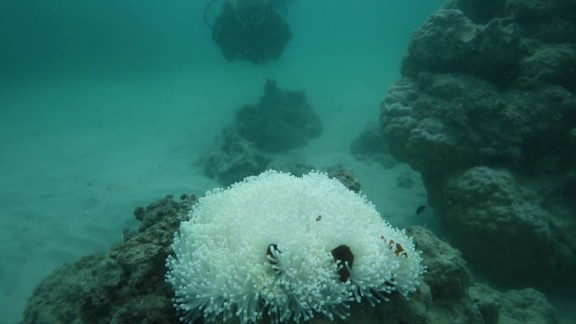 great barrier reef coral bleaching wwf orig mg_00000118.jpg
