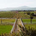 PADDOCKS.AND.VINES