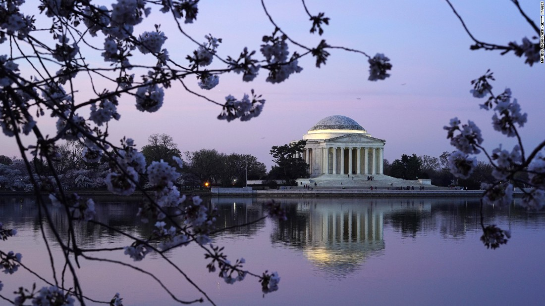 The Jefferson Memorial framed by cherry blossoms is one of the classic photographs captured by visitors.