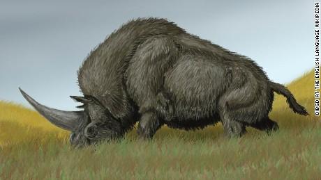 Real Unicorn Remains Found Cnn