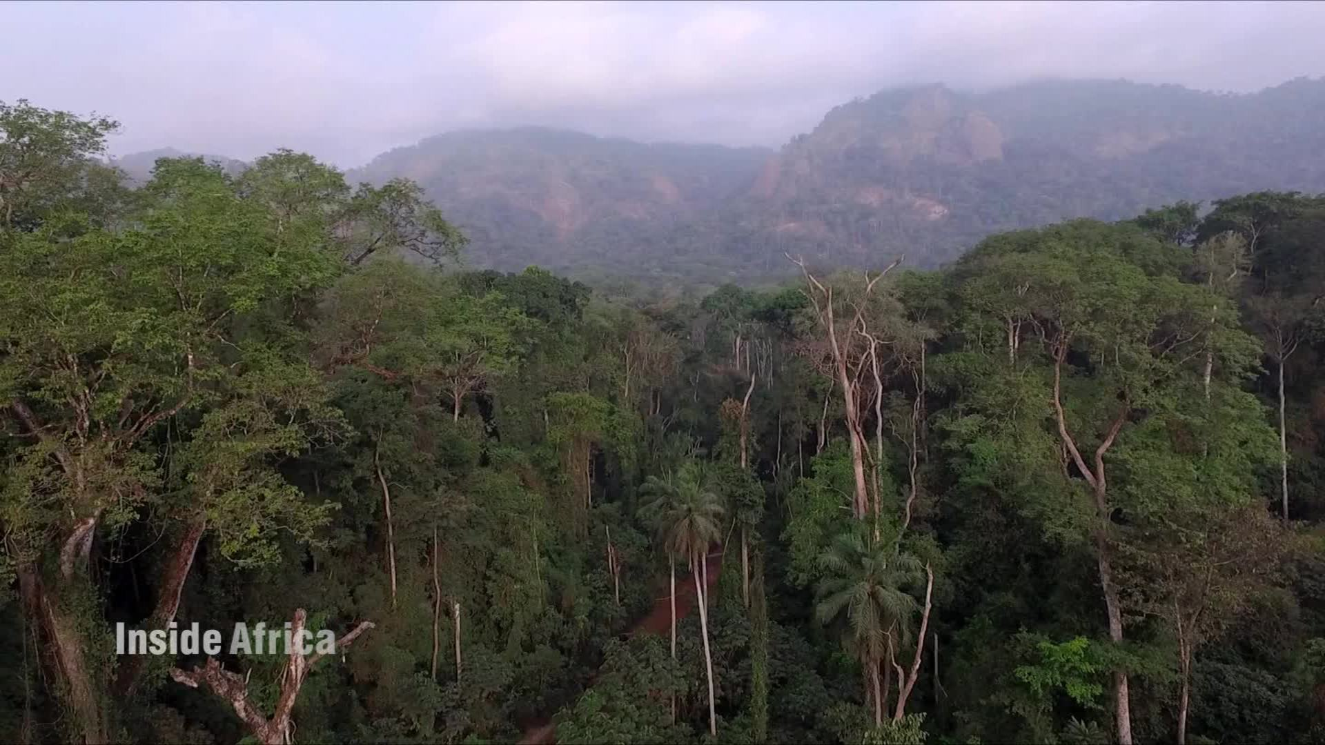 Inside one of the oldest primary rainforests in africa cnn video sciox Image collections