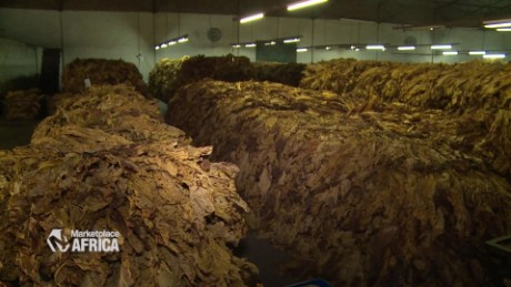 Tobacco producers in Zimbabwe are banking on growth