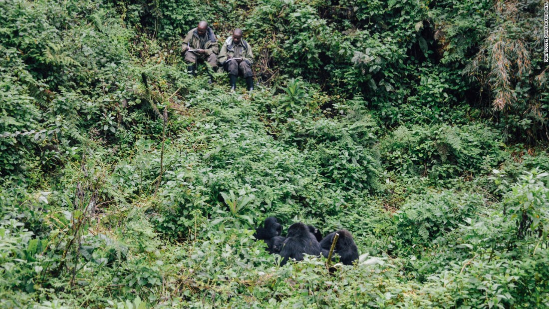 The Fossey Fund's trackers watch a group of gorillas.