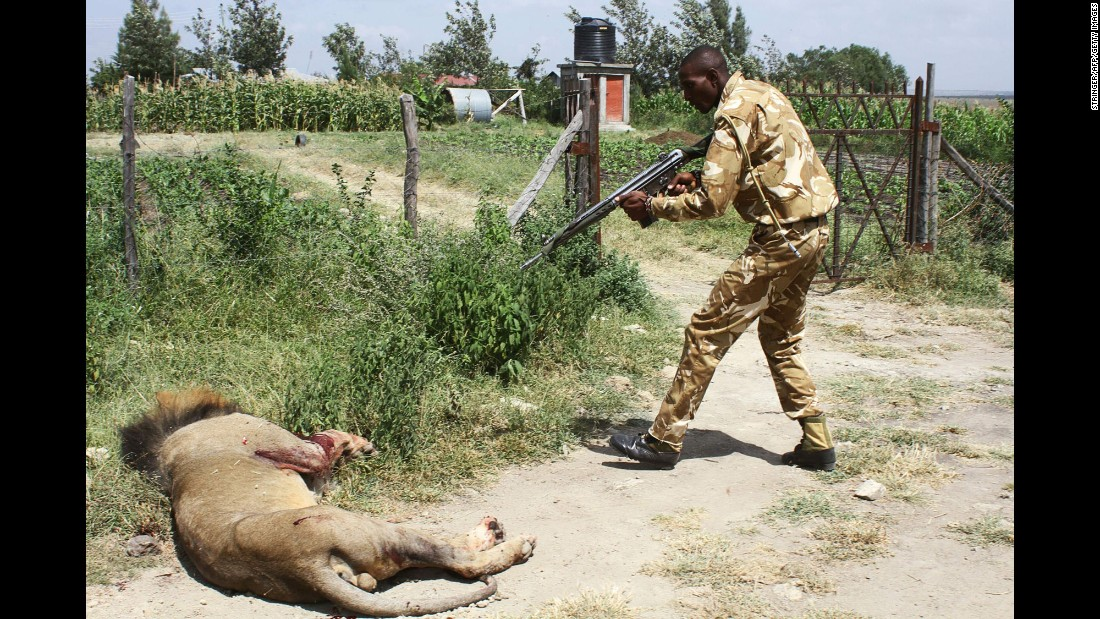 "A ranger of the Kenya Wildflife Service shoots Mohawk the lion after the lion escaped from a park and pounced on a man in Nairobi, Kenya, on Wednesday, March 30. <a href=""http://www.cnn.com/2016/03/31/africa/kenya-mohawk-lion-killed/"" target=""_blank"">The lion's death</a> sparked an outcry among Kenyans, who used the hashtag #JusticeforMohawk to ask why rangers did not tranquilize him instead. Kenya Wildlife Service spokesman Paul Udoto said rangers shot the lion to save lives before veterinarians could arrive with tranquilizers. ""This action was taken as a last resort after an escalation of the situation and a concern for public safety,"" the Kenya Wildlife Service said. The man who was attacked was hospitalized with deep lacerations and bruises."