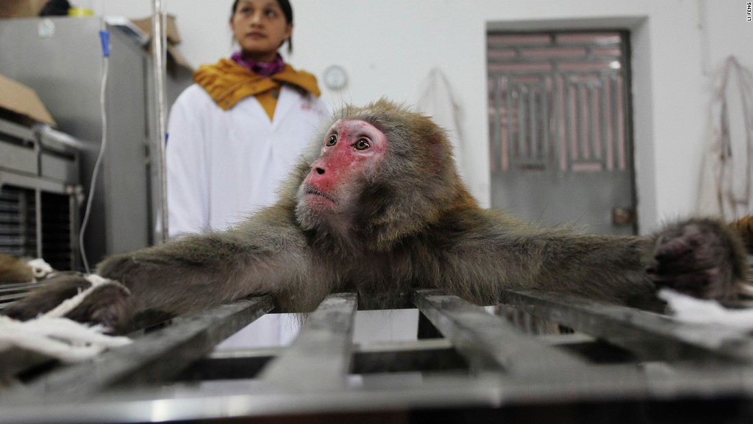 "The breeding of macaque monkeys for animal testing is exposed and explored by Li Feng, who was shortlisted in the ""Environment"" category."