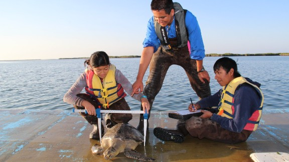 Ocean Discovery Institute students measure a sea turtle.